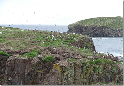 nl_pr_elliston_bird_island