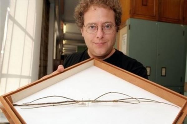 Serangga Terpanjang di Dunia.jpg