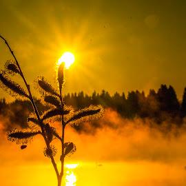 Sunrise oj Zierings Pond by Franz  Adolf - Landscapes Sunsets & Sunrises