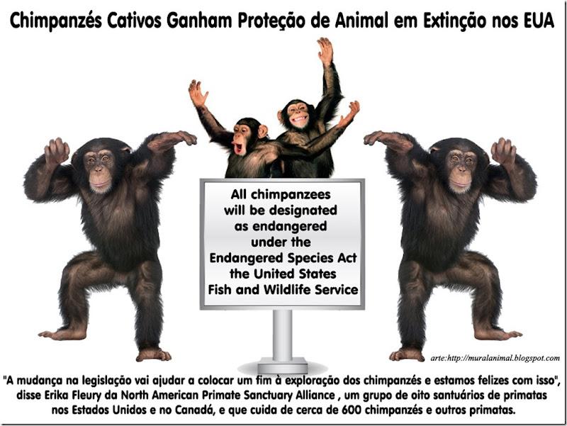 chimpanze-extincao