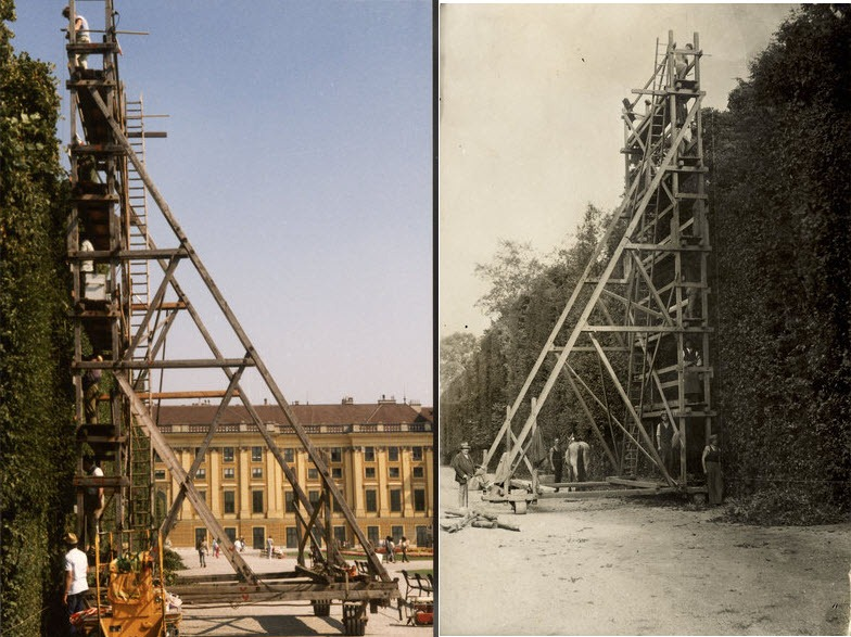schönbrunn-palace-trimmed-trees-12