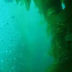 Live Aboard dive boat trip