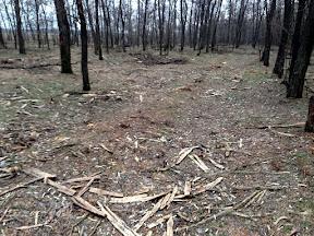 лес29.jpg