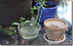 1425810962-planting-herb-cuttings