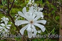 Glória Ishizaka - Hortus Botanicus Leiden - 18