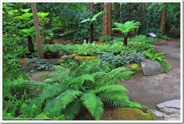 150628_Vancouver_VandusenBG_0091
