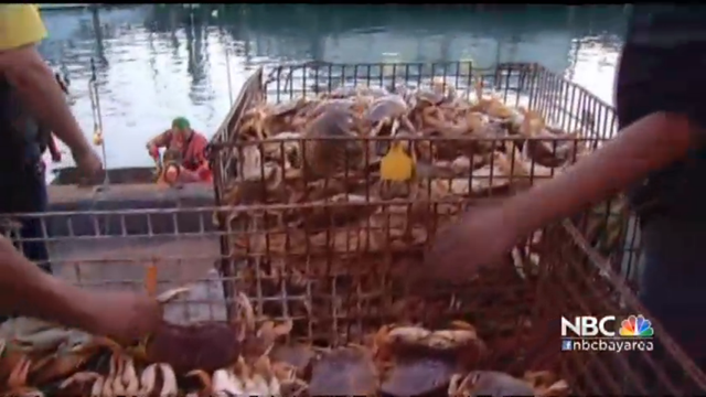 Fishermen in San Francisco load crabs from traps onto the boat. In an unprecedented move, the California Fish and Game Commission voted on 5 November 2015 to delay the opening of crab season because of potentially deadly levels of domoic acid found in Dungeness and rock crabs along the U.S. West Coast. Photo: NBC Bay Area