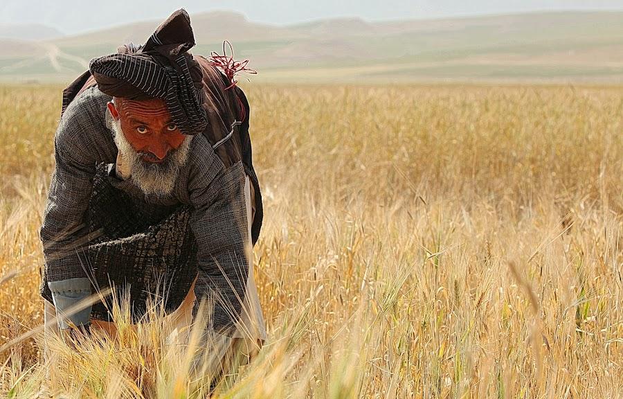 Wheat Mowing by Daniel Bernazza - People Portraits of Men
