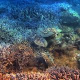 SnorkelingNosyHara
