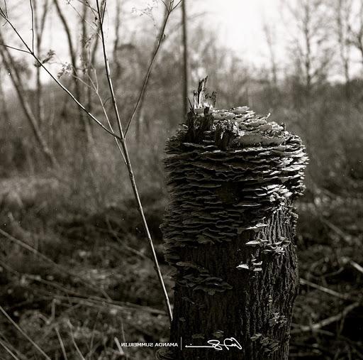film picture of stump.jpg