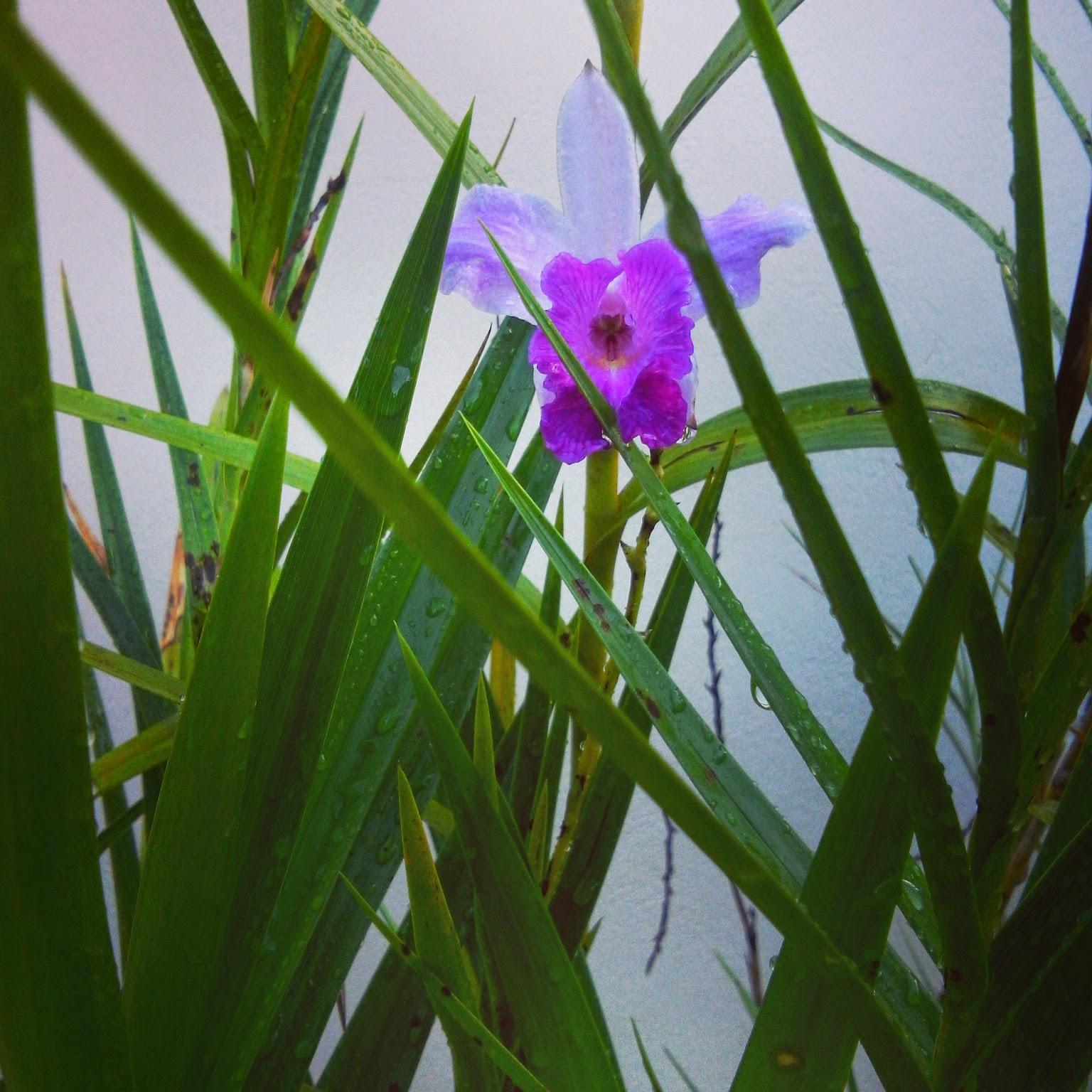 Meu adoravel jardim orqu deas bambu - Bambu planta exterior ...