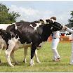 cattle03.jpg