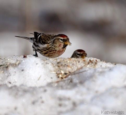 8. snowbirds-kab