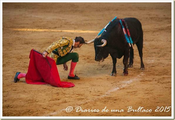Toros Feria 2015-0014
