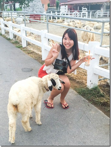Huahin swiss sheep farm