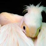 StorkHead.jpg