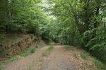 Subiendo por el bosque