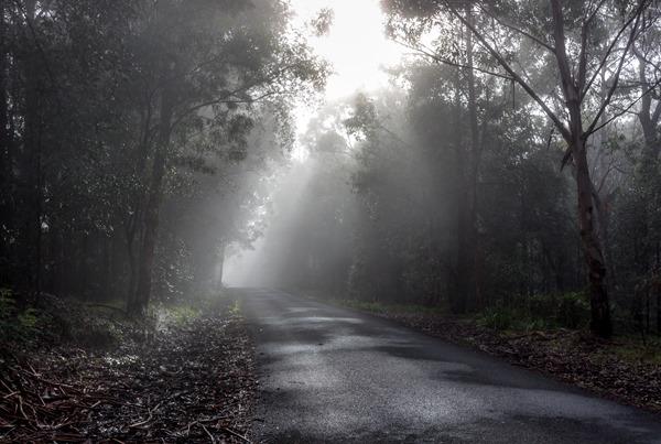 Wishful Thinking - Kangaroo Valley