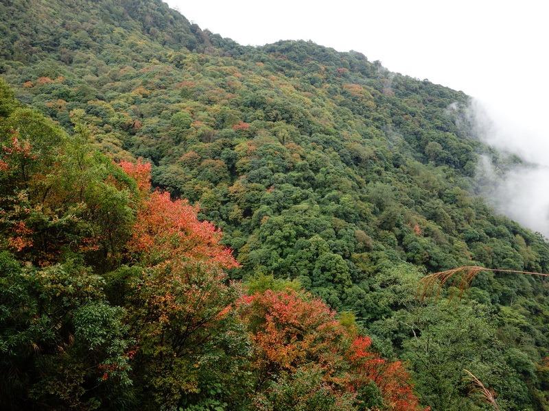 2013_1126-1129 鹿林山-1_185