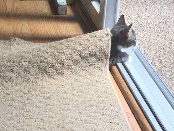 Os gatos não são muito bons em esconde-esconde 23