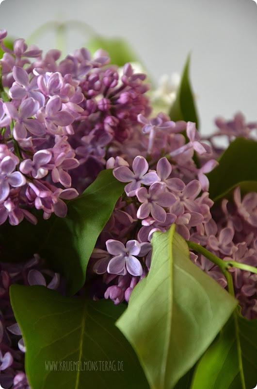 Flieder (02) in lila, flieder und weiß aus dem Garten