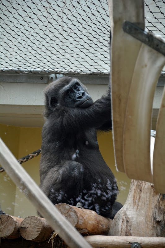 Zoo Heidelberg (17)