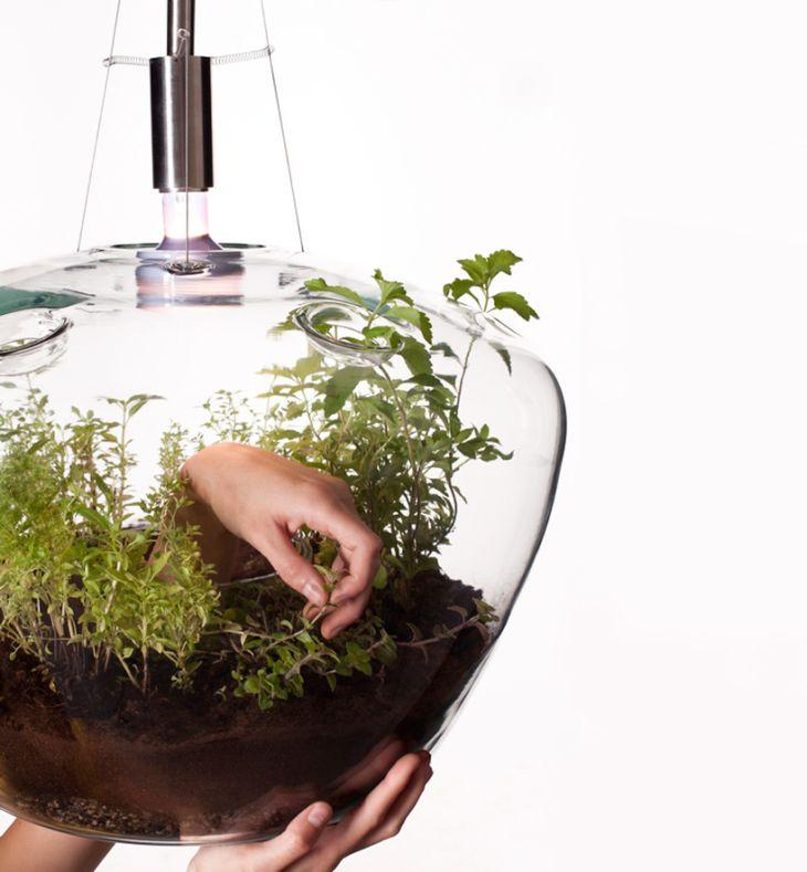 Greenhouse By Czech Designer