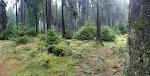 Und jeden Tag immer wieder neue tolle Waldlandschaften.
