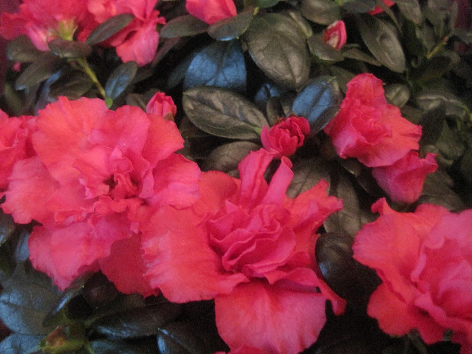 asian wedding flower