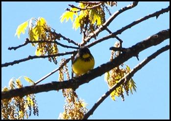 02c - birds - Yellow whatever