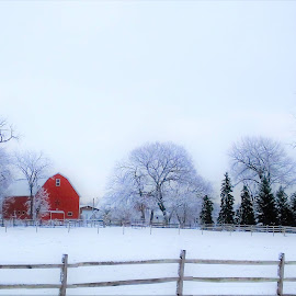 Red Barn by Kathy Bohlman - Landscapes Prairies, Meadows & Fields ( barn, frosted trees, country )