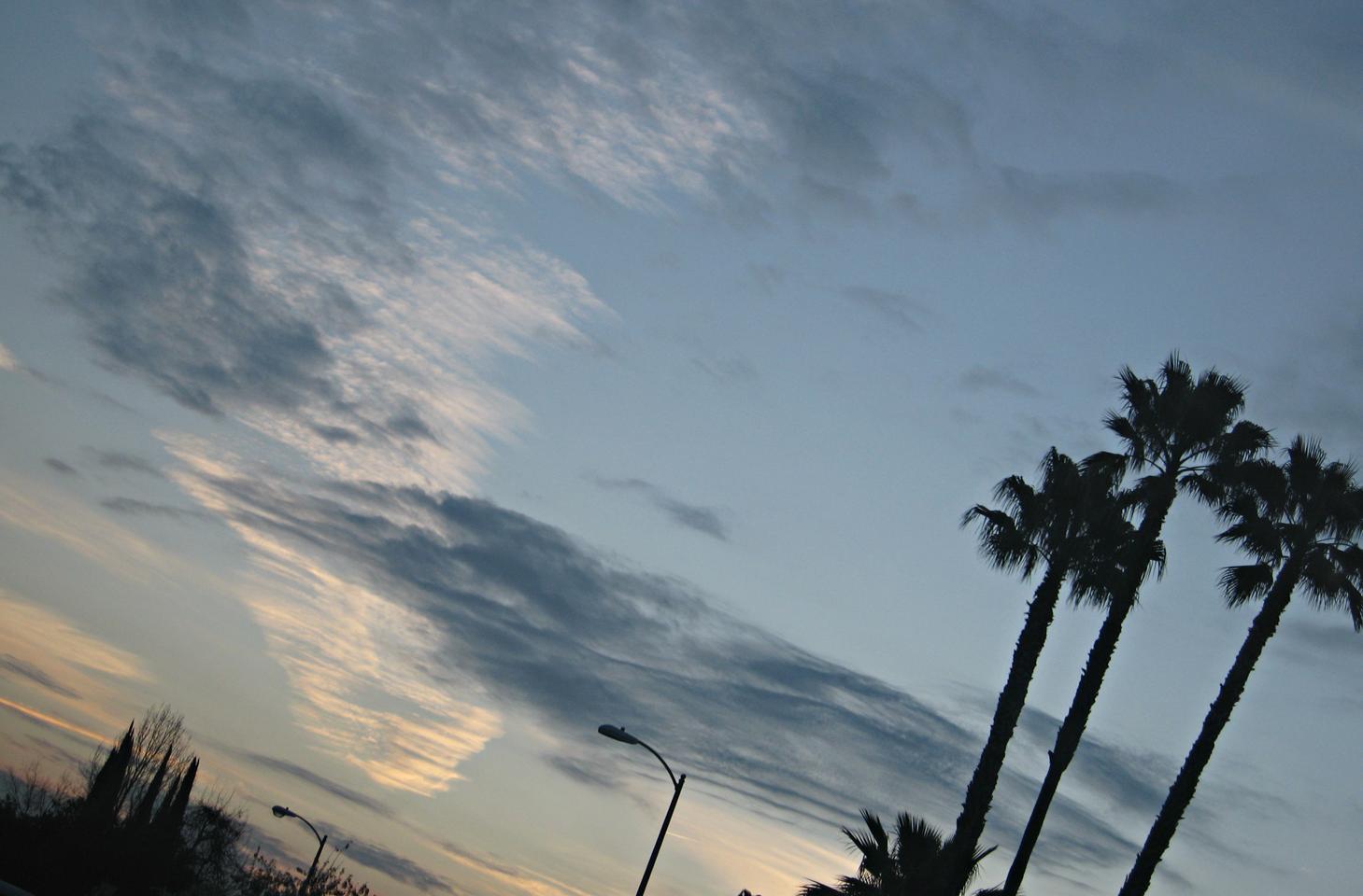 LA lately ...but so pretty