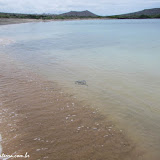 Raia - Española - Galápagos