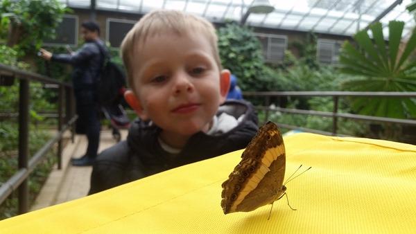 virtù - butterflies