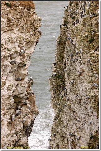 Bempton Cliffs RSPB - May