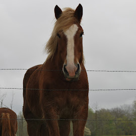Apple please by Brenda Hall - Animals Horses