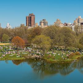 Central Park by Tomasz Karasek - City,  Street & Park  City Parks ( water, blue sky, skyscrapers, grass, green, new york, central park, pond )