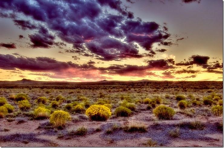 Flickr-desert-mtungate