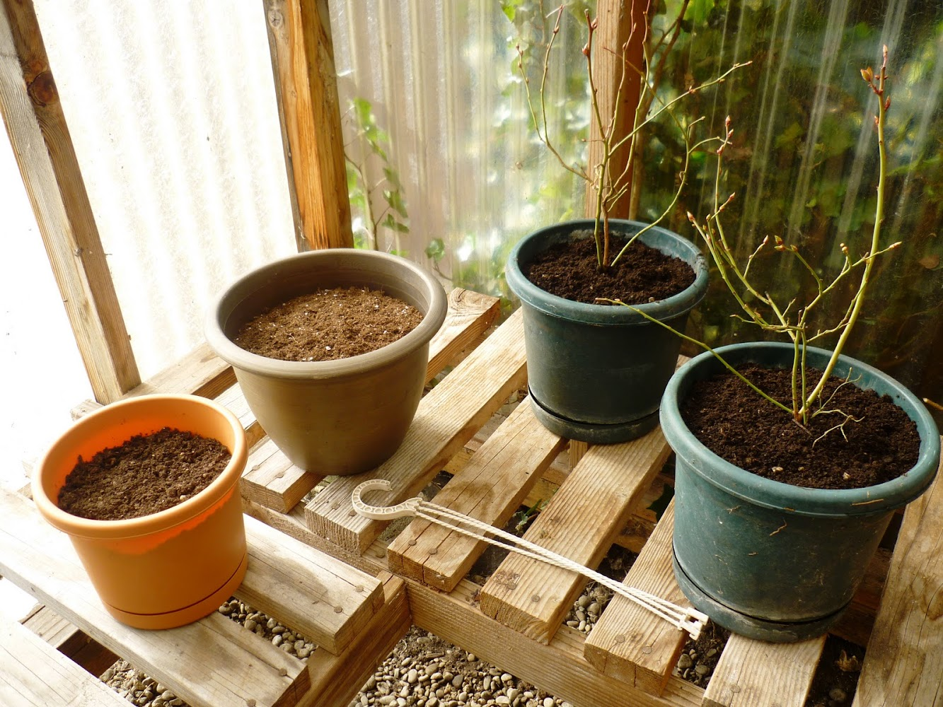 Baby Steps to Gardening