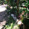 jardim da casa 01.jpg