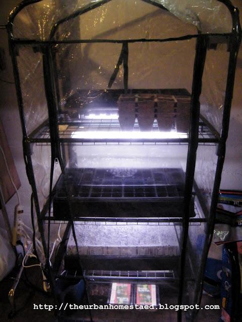 Diy inexpensive seed starting setup or indoor greenhouse for Indoor gardening minneapolis