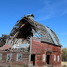 Out to Pasture by Terese Hale - Buildings & Architecture Decaying & Abandoned ( dilapidated, ancient, barn, ruins, abandoned )