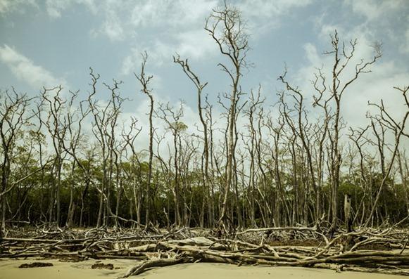 Praia da Romana - Curuçà, Parà, fonte: bestriders.com.br