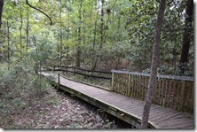 Boardwalk Path-2