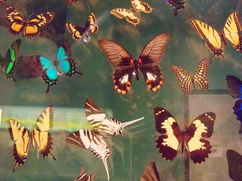 Houston Museum of Natural Science - 116_2861.JPG