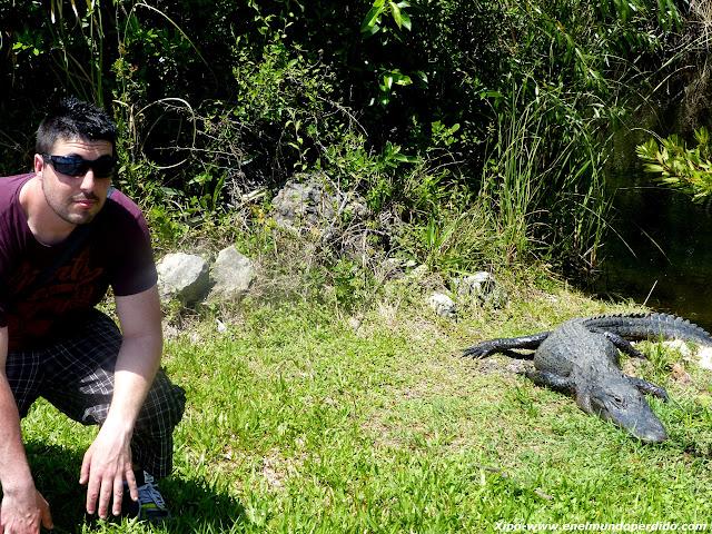 alligator-ahead.JPG