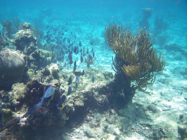 Buck Island Reef - IMGP0019.JPG