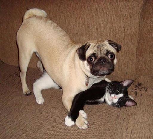Fotos com flagras de gatinhas amadoras