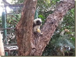 20150503_monkey in tree (Small)