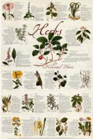 Cover of John Opsopaus's Book Interpretationes Of Ancient Herbs